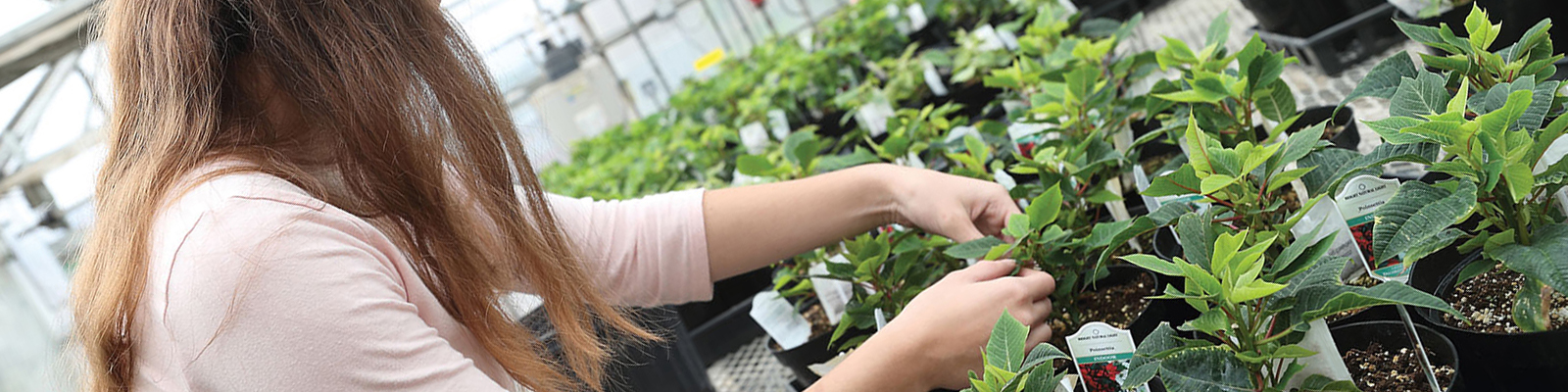 female student tending to plants in greenhouse